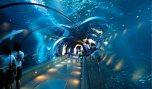 newport-aquarium
